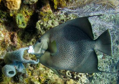 west-end-divers-resort-roatan-diving-fish-gallery