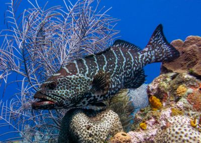 west-end-divers-resort-roatan-diving-fish2